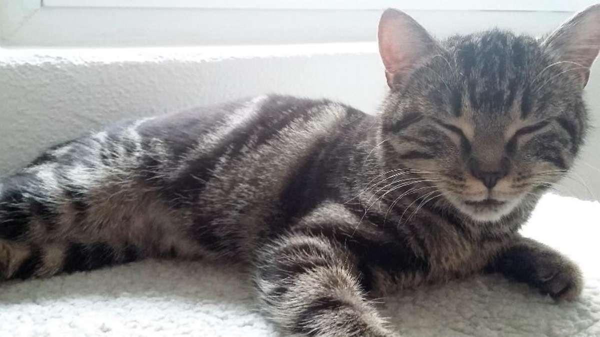 traunstein eine besondere katze braucht ein besonderes zuhause tierheim. Black Bedroom Furniture Sets. Home Design Ideas