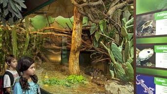 30 Jahre Aquarium Und Reptilienzoo