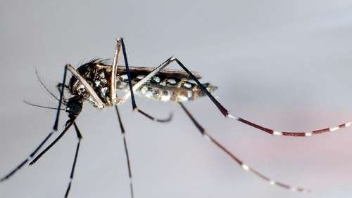 WHO warnt vor Dengue-Fieber in Europa