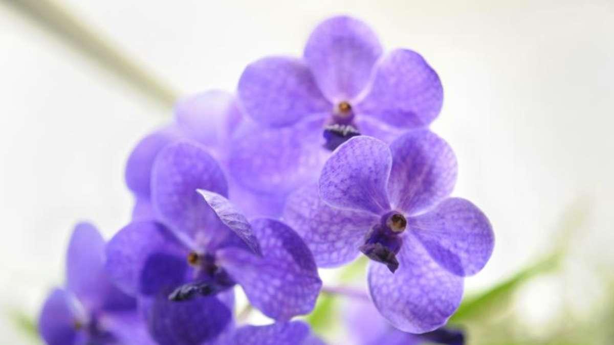 orchideen brauchen im fr hling extra pflege garten. Black Bedroom Furniture Sets. Home Design Ideas